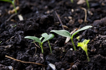 Green seedling illustrating concept of new life  Stock Photo - 12120186