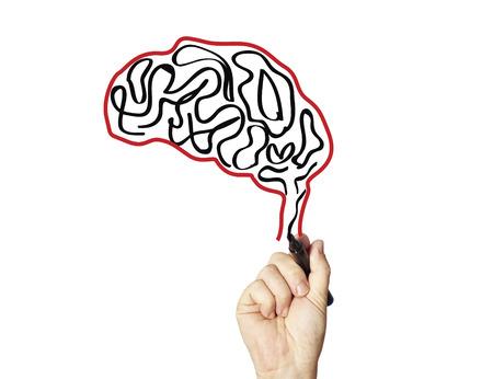 fissures: brain
