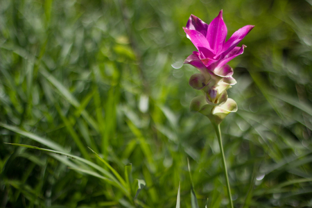 breezy: flower of thailand