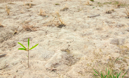 one plant growing in dry area, use for the growing in bad situation photo