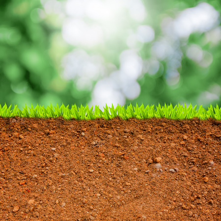 cross section: cross section of grass and soil against green bokeh  Stock Photo