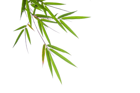 bamboo leaf: bamboo leaves isolated on white background, clipping path included