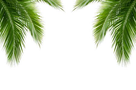feuilles de cocotier isolé sur fond blanc, chemin de détourage inclus