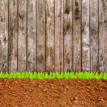 cross section of grass and soil against wood wall. photo