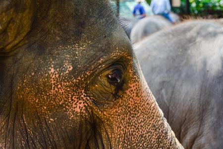 Elephant's head in the zoo.