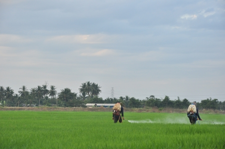Farmer spraying pesticide on rice field at Thailand Stock Photo - 17092956