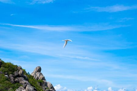The flying bird in beautiful blue sky