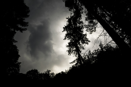 Low Angle View Of Pine Tree Silhouettes Against Stormy Sky