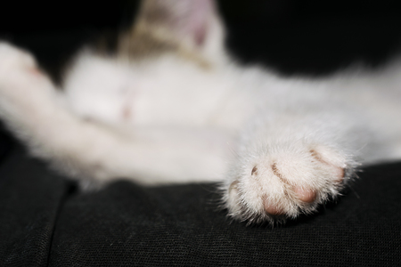 living organism: Close-Up Of The Paw Of A Sleeping White Kitten