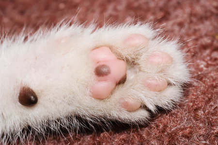 living organism: Extreme Close-Up Of The Paw Of A White Kitten
