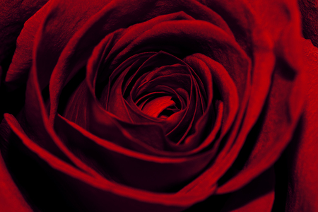 Extreme Close-Up Of Beautiful Red Rose Imagens