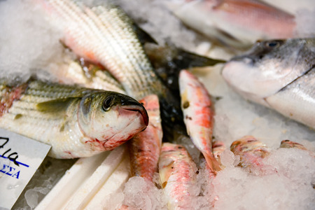Close-Up Of Freshly Caught European Sea Bass Or Dicentrarchus Labrax On Ice For Sale In The Greek Fish Market