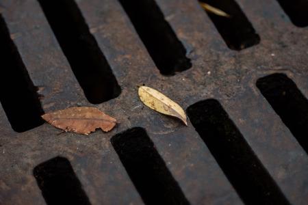 Herbstlaub auf Entwässerung Kanalisation Luke mit Gitter