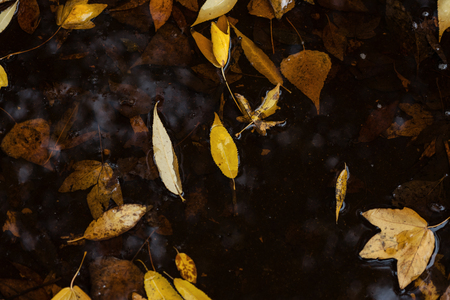 Autumn Leaves In Puddle Of Water