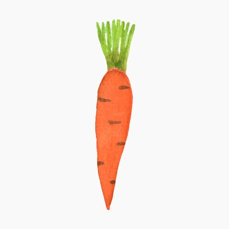 traced: Hand-drawn carrot. Real watercolor drawing. Vector illustration. Traced painting