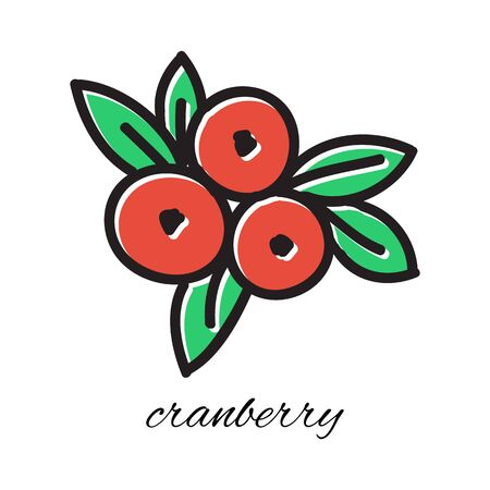 cranberry illustration: Hand drawn cranberry in doodle style. Vector illustration. Sketch