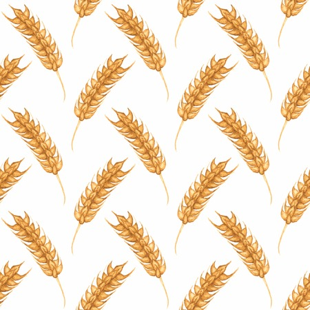 winter wheat: Seamless watercolor pattern with ear of wheat on the white background Illustration
