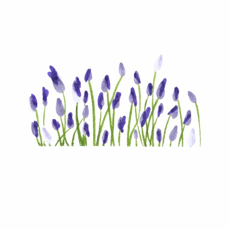 Lavender border. Watercolor hand drawn floral border. Vector illustration. Hand painting decorative element. Illustration for greeting cards, invitations, and other printing projects.