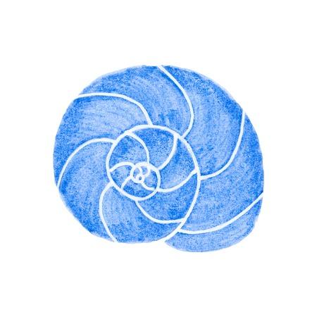 molluscs: Molluscs shell.  Watercolor clam on the white background, aquarelle. Vector illustration. Hand-drawn marine decorative element useful for invitations, scrapbooking, design.
