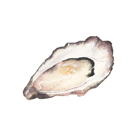 oyster shell: Watercolor oyster on the white background, aquarelle. Vector illustration. Hand-drawn decorative element. Seafood and marine cuisine