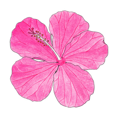 Hibiscus. Hand-drawn flower. Real watercolor drawing. Vector illustration. Traced painting