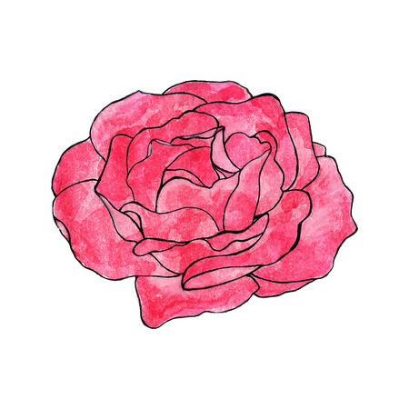 rosebud: Rose. Hand-drawn flower. Real watercolor drawing. Vector illustration. Traced painting