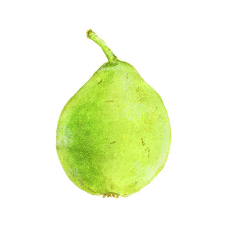 traced: Pear. Hand-drawn fruit. Real watercolor drawing. Vector illustration. Traced painting