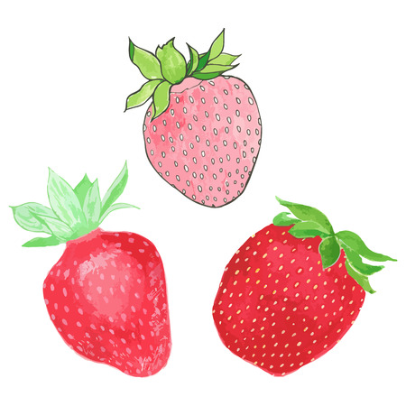 traced: Strawberries. Hand-drawn berries. Real watercolor drawing. Vector illustration. Traced painting Illustration