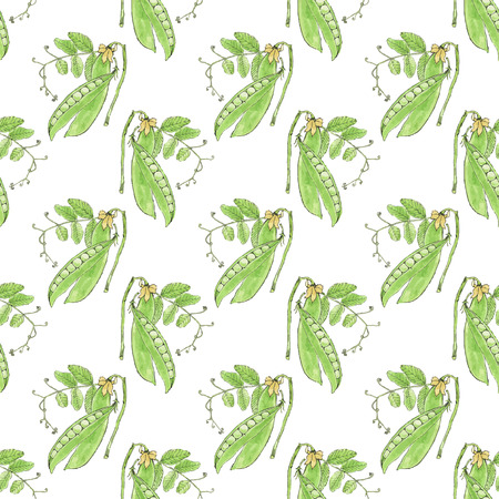 Green pea. Seamless pattern with vegetables. Hand-drawn background. Vector illustration. Real watercolor drawing.