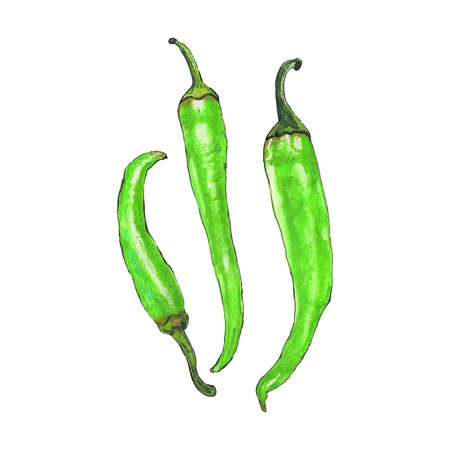 cayenne: Green cayenne peppers. Hand-drawn fresh vegetables. Real watercolor drawing. Vector illustration. Traced painting Vectores
