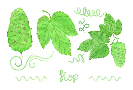 hops: Hop, beer brewing set. Hand-drawn hops swirles flower and leaves. Real watercolor drawing. Stock Photo
