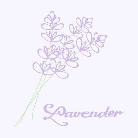 fragrant bouquet: Lavender bouquet. Hand drawn flowers - Doodle drawing.