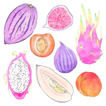 exotic fruits: Set of watercolor exotic fruits - pepino melon, dragonfruit, apricot and fig. Hand-drawn collection. Real watercolor drawing - vector illustration. Illustration