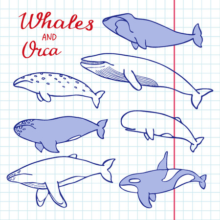 cachalot: Whales and orca set. Hand-drawn cartoon collection of sea mammals - killer, sperm, blue, humpback, grey, fin, bowhead whales and cachalot. Doodle pen drawing on the notebook page. Vector illustration