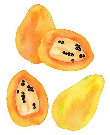 papaw: Papaya or papaw set. Hand-drawn fruits - colorful papayas on the white background. Real watercolor drawing.