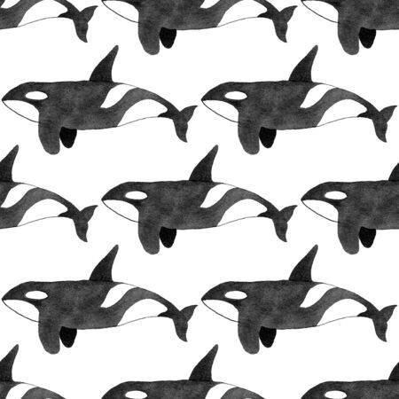 orcinus: Orca or killer whale. Seamless pattern with hand-drawn animal - Orcinus orca on the white background. Real watercolor drawing.