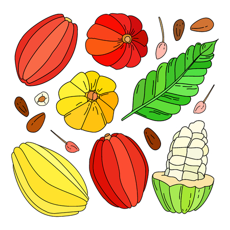Cocoa fruit illustration set, Hand drawn vector tropical cacao fruit, leaf, seed and flower isolated on the white background, doodle or sketch