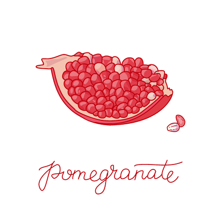 Pomegranate fruit doodle vector illustration, Hand drawn vector red fruit and seeds arrangement isolated on the white background, doodle illustration with calligraphic text Ilustração