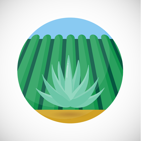 Blue agave vector flat icon, Flat design of tequila product ingredient, agave heart, field and sky background, vector concept illustration with shadows