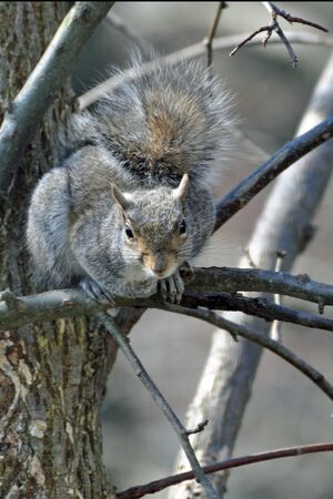 Squirrel Looking From Tree Imagens