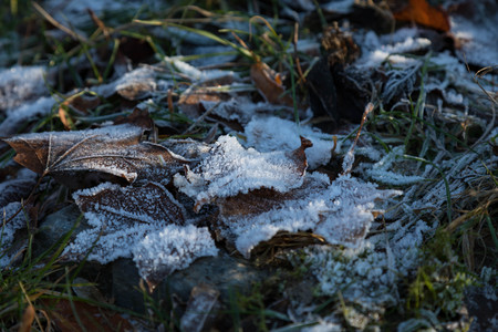 frosted: Frosted ground beginning of december in Dusseldorf (Germany  North-Rhine-Westphalia) Stock Photo