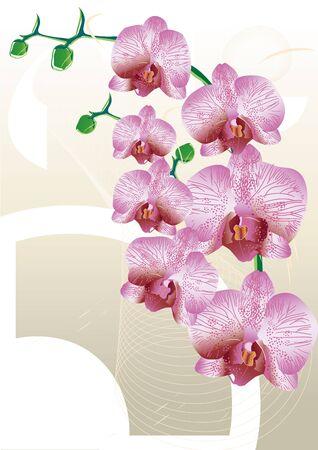 orchid gradient light Vector