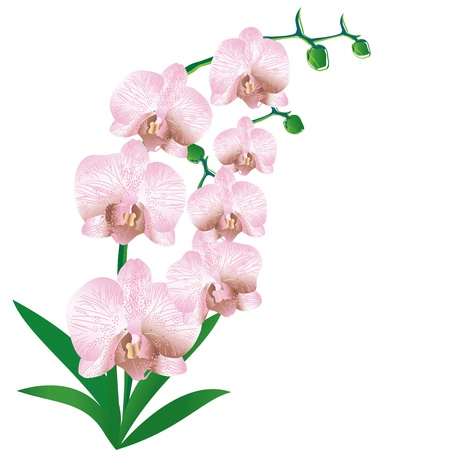 Stylized orchid Illustration