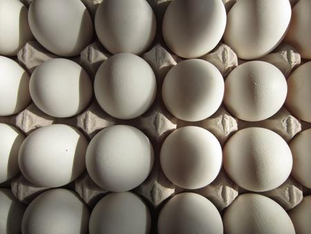 eggtray: EGG TRAY