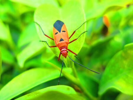 nice looking: A NICE LOOKING COLOURFUL INSECT ON GREEN LEAF.