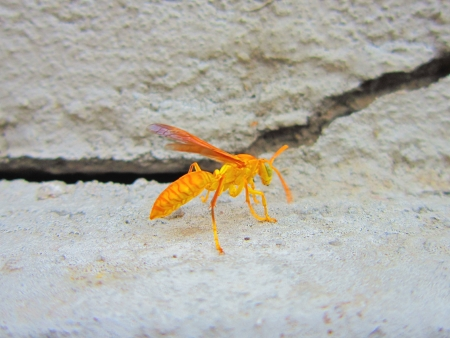 nice looking: NICE LOOKING WASP. SIDE VIEW. IN FRONT OF ITS HOME. Stock Photo