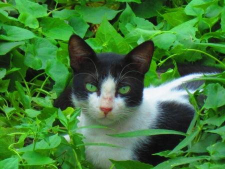 facing the camera: CAT FACING CAMERA