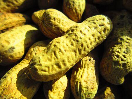 groundnut: mumphali or groundnut  nice close up