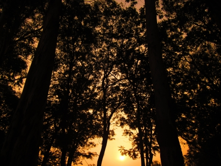 stupendous: SUNRISE AS SEEN THROUGH A FOREST Stock Photo