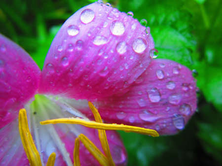 colourful flower with raindrops Stock Photo